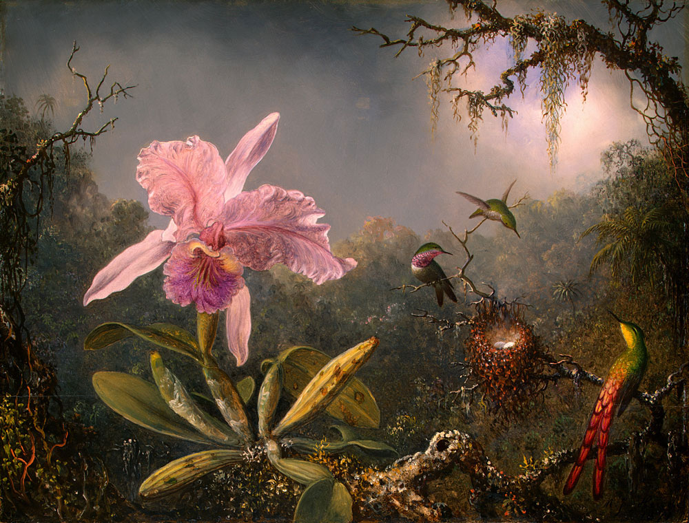 cattleya-orchid-and-three-hummingbirds-1871